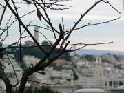 San Francisco_Russian Hill