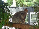 Port Macquarie_Koala Hospital