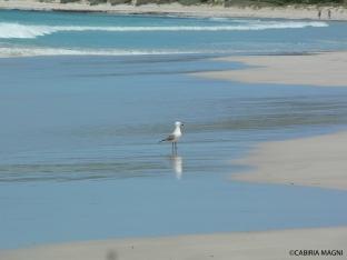 Kangaroo Island_Vivonne Bay