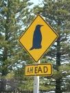 Kangaroo Island_Signals in Penneshaw