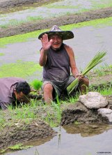 Worker @Bali east rice terraces