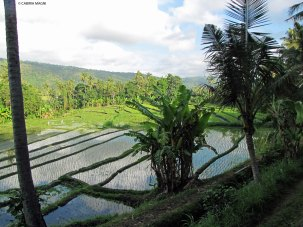 Kastala Rice Terraces