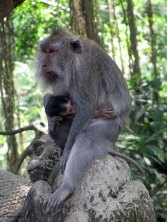 Sacred Monkey Forest - Ubud