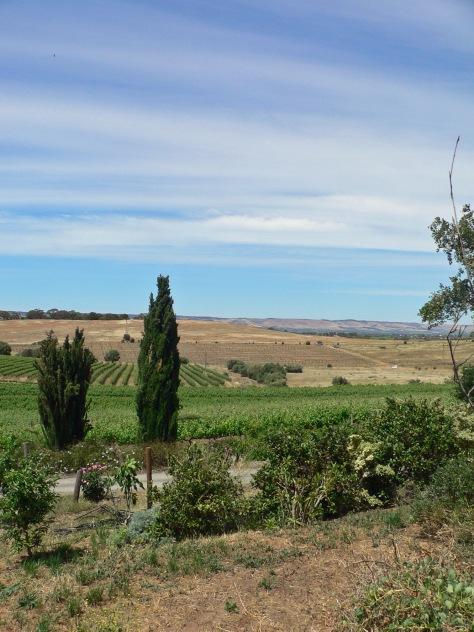 McLaren Vale Landscape