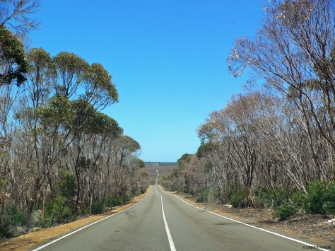 Driving to Flinders Chase National Park