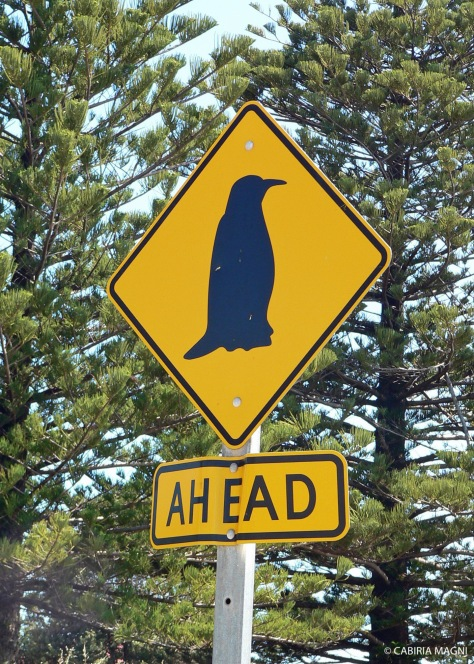 Penguins ahead!