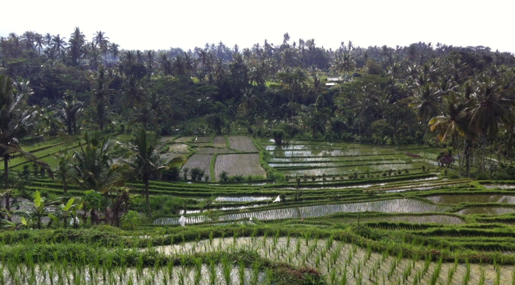 Kastala rice terraces, Bali
