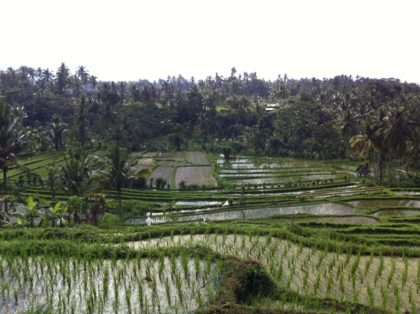 Kastala rice terraces, Bali