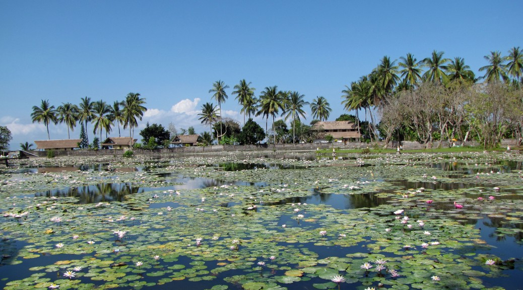 Lotus lagoon in Candidasa