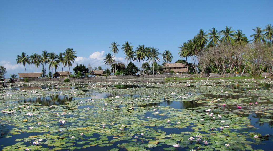Lotus lagoon in Candidasa