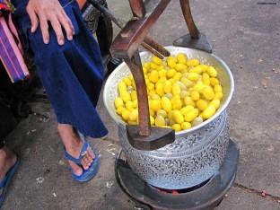 Yellow Cocoon