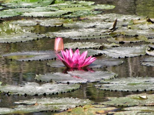 flower lagoon bali