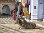 Life in Pushkar