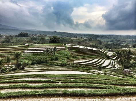 Le risaie di Jatiluwih Cabiria Magni