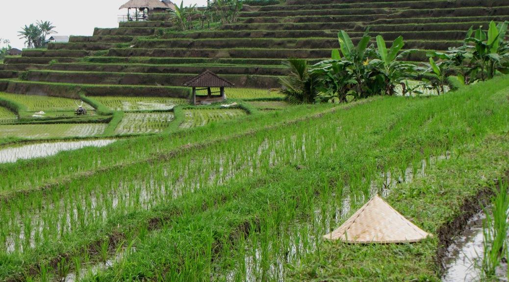 Jatiluwih rice terraces, Cabiria Magni