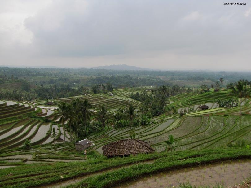 Jatiluwih, vista sulle risaie, Cabiria Magni
