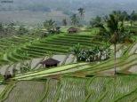 Jatiluwih, vista sulle risaie