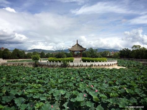 I fiori di loto del tempio di Confucio, Jianshui. Cabiria Magni