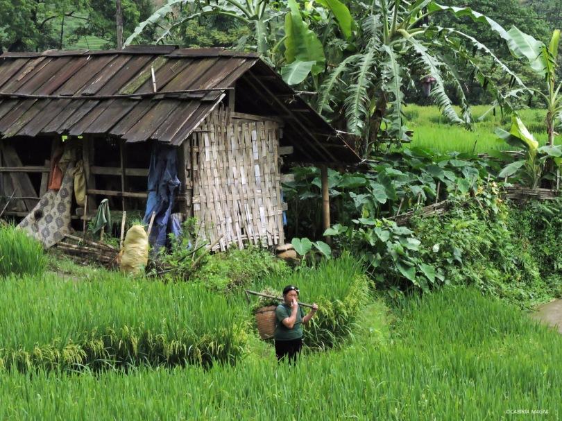 Sapa. Cabiria Magni, Vietnam