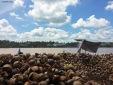 Delta del Mekong: lavorazione del cocco. Cabiria Magni, Vietnam
