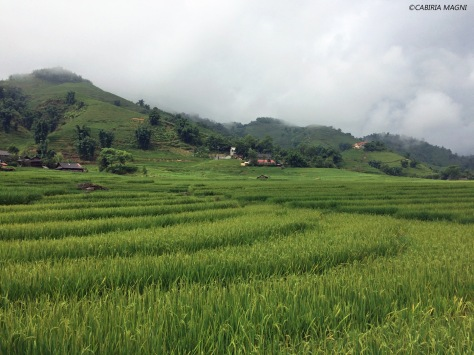Le risaie di Sapa, Vietnam. Cabiria Magni