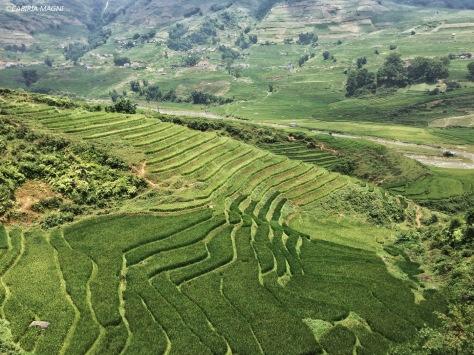 Sapa, i terrazzamenti. Vietnam. Cabiria Magni