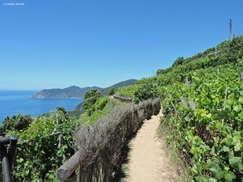 Lungo il sentiero 586, da Volastra a Corniglia. Liguria, Cabiria Magni