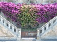 Levanto, cascata di fiori sul lungomare. Liguria, Cabiria Magni