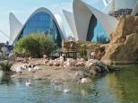 Città della Scienza, acquario, Valencia, Cabiria Magni